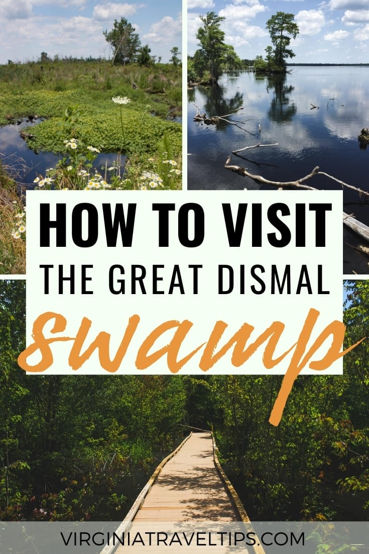 How to visit the Great Dismal Swamp in Virginia | Places in Virginia | #greatdismalswamp #suffolk #virginia #lakedrummond | Things to do in Virginia | Virginia Itinerary | Places to visit in VA | Places in Virginia | Virginia parks | Virginia wildlife | Virginia lakes | Virginia swamps | Virginia historical places | Virginia nature | Virginia state parks | What to do in Virginia | Virginia tourism | Virginia travel | Visit Virginia | travel to Virginia | Virginia off the path places