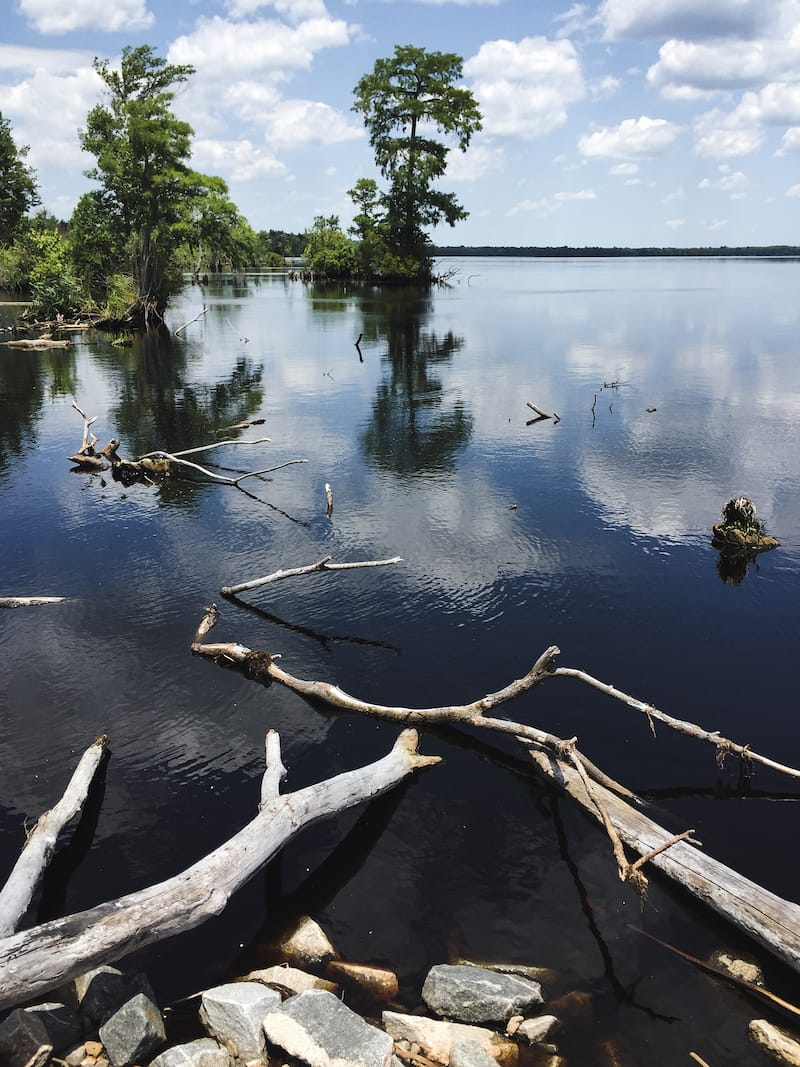 How to Visit the Great Dismal Swamp in Virginia (Tips + Facts)