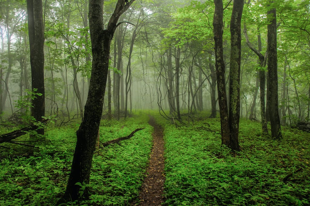 Appalachian Trail Virginia hiking near Charlottesville : Best hiking near Charlottesville