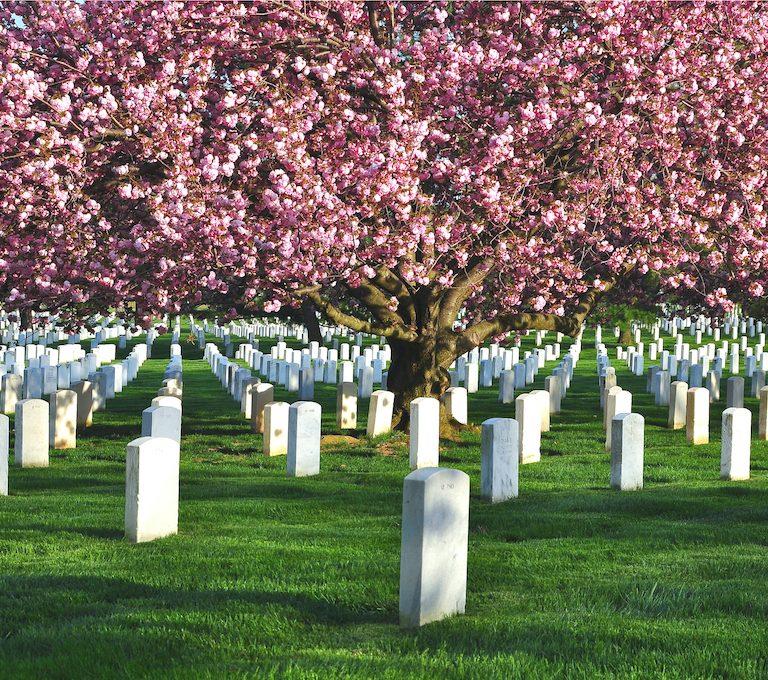 Arlington National Cemetery during spring