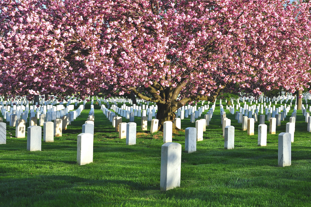 Arlington National Cemetery during spring