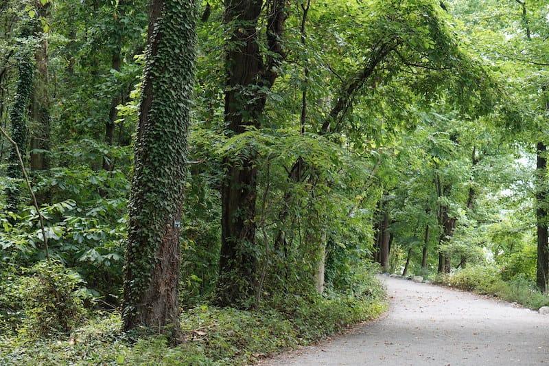 Belle Isle forest in Richmond VA