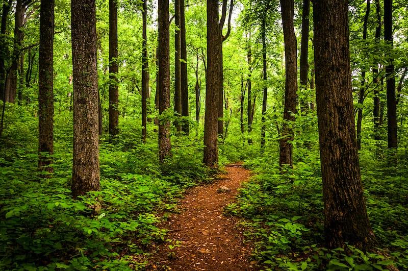 Hiking at Shenandoah National Park in Virginia near Charlottesville