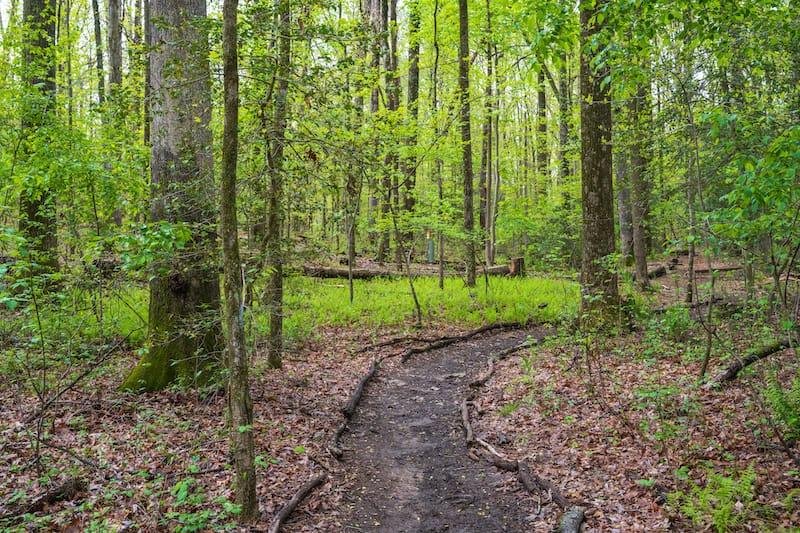 Hiking in Virginia trail