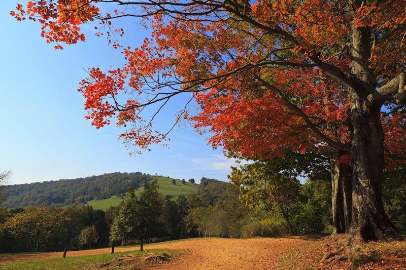 Monticello hiking trails in Charlottesville Virginia