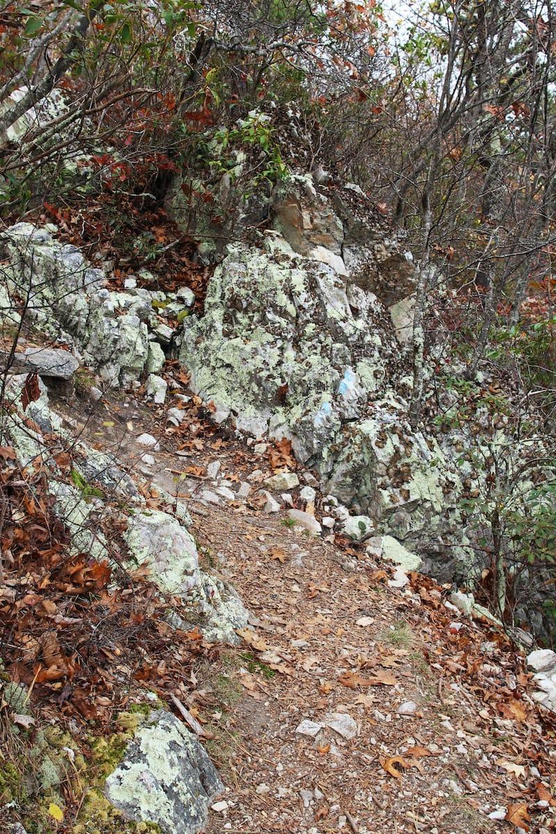 Turk Mountain Trail near Charlottesville Virginia hiking trail