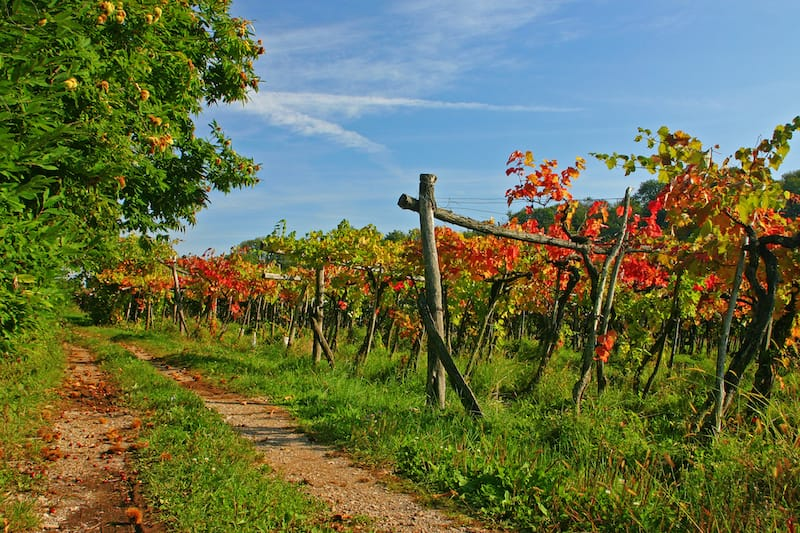 Best day trips from Richmond - Virginia wine country
