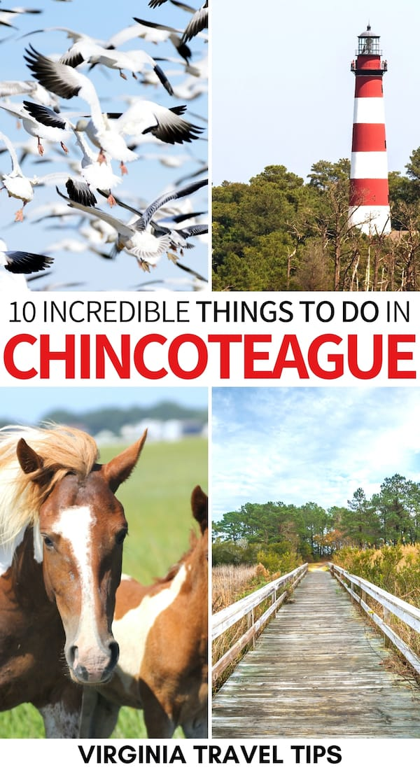 Is Chincoteague on the top of your Virginia bucket list? It should be and here are the best things to do in Chincoteague for first-time visitors! | Eastern Shore Virginia | ESVA | Assateague Island | Places to visit in Virginia | Chincoteague Island things to do | Chincoteague ponies | Chincoteague Island vacation | chincoteague island restaurants | Chincoteague island pictures | Virginia's eastern shore