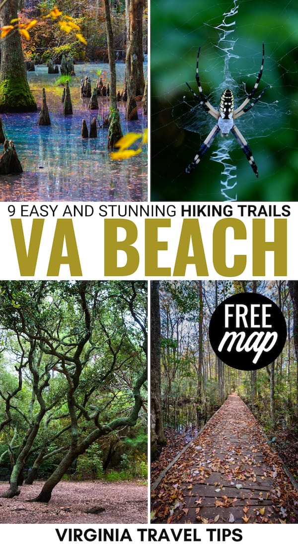 Are you looking for the best hiking trails in Virginia Beach? This guide details the best easy Virginia Beach trails for all skill levels, including a map! | Virginia hiking | Hikes in Virginia | Virginia trails | Virginia nature | Virginia Outdoor | First Landing State Park trails | First Landing State Park hiking | Back Bay National Wildlife Refuge | Mount Trashmore | Things to do in Virginia Beach | Virginia Beach things to do | Travel to Virginia Beach | Day Hikes Virginia Beach