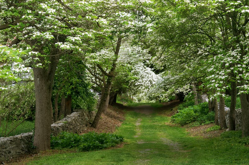 Dogwood Lane, Virginia State Arboretum