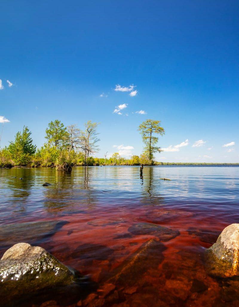 Great-Dismal-Swamp-and-Lake-Drummond-Virginia-4