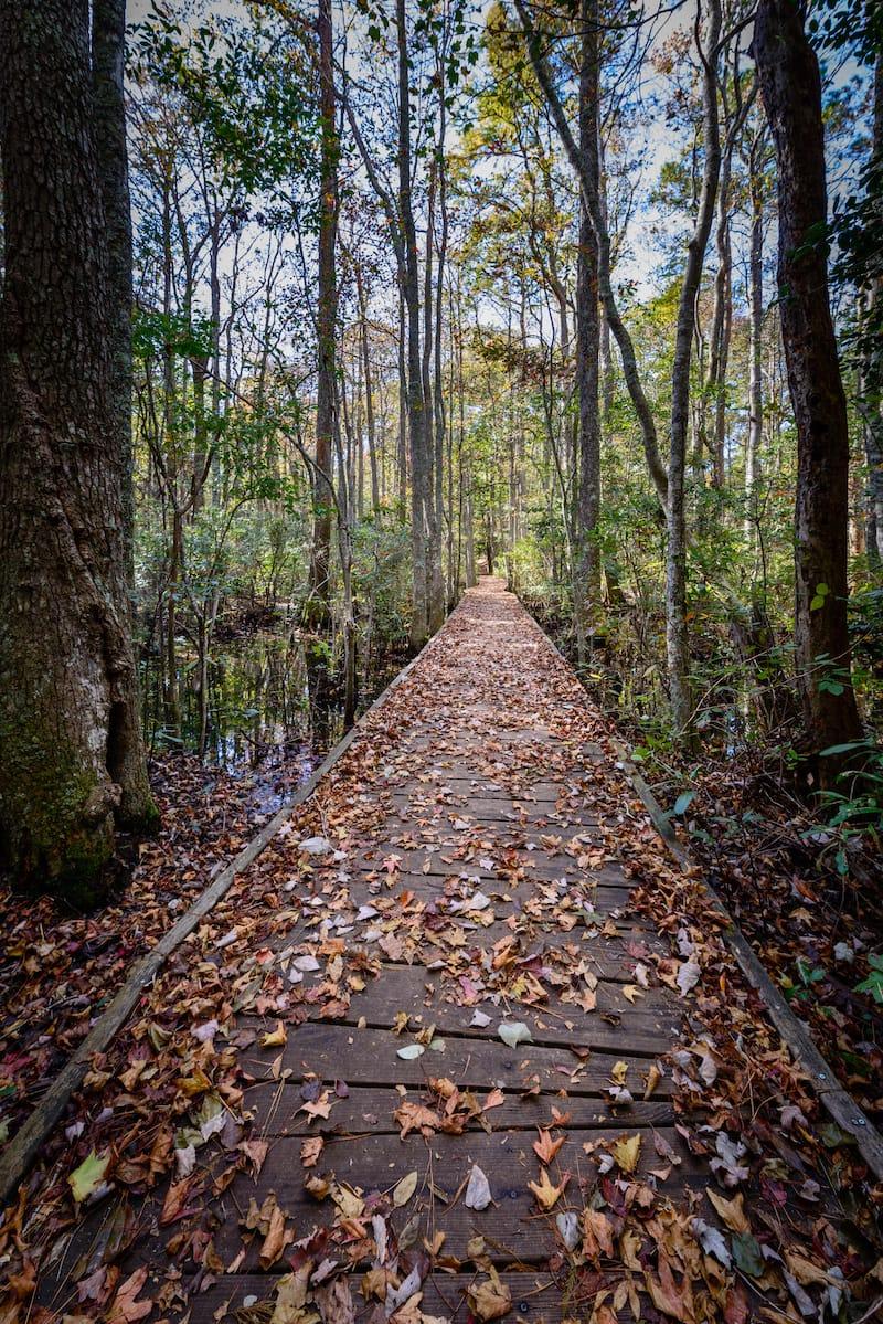 Osmanthus Trail