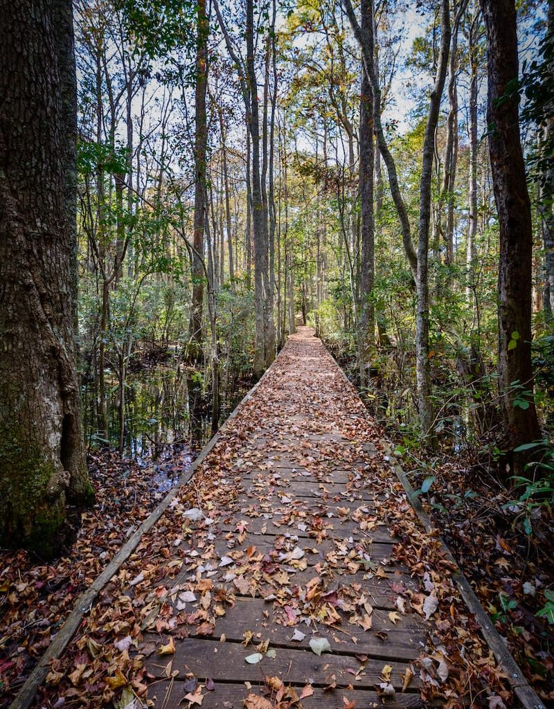 Osmanthus Trail at First Landing State Park