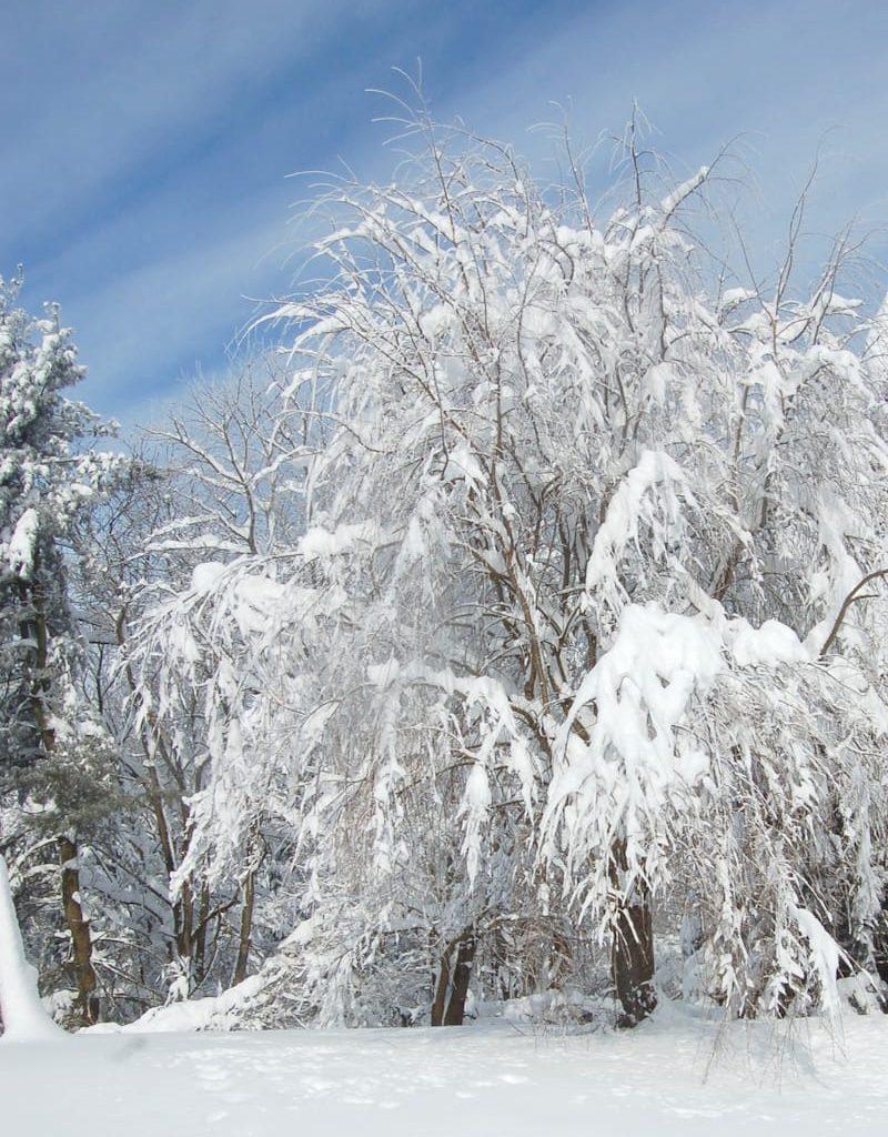 Shenandoah-in-winter-travel-guide