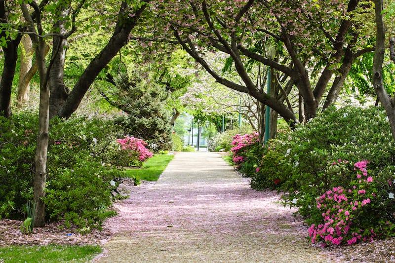 Spring in Washington DC park