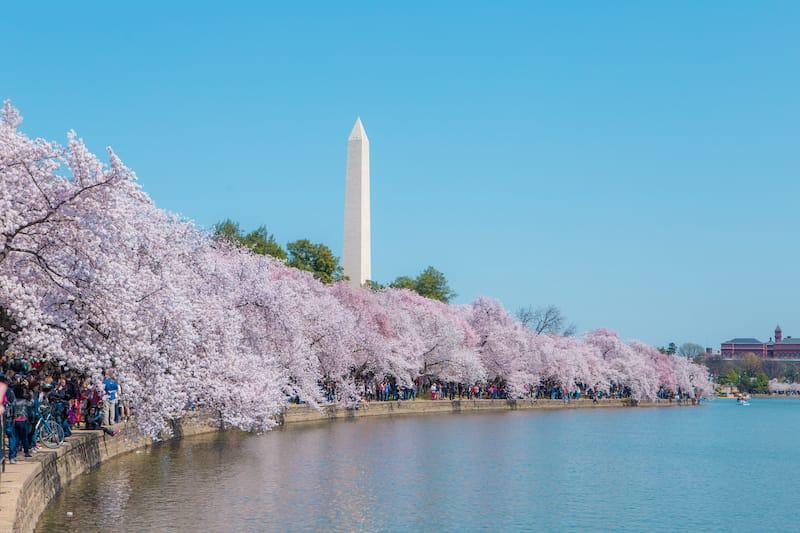Tidal Basin in Spring in Washington DC