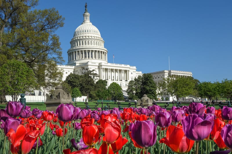 Tulips at US Capitol in spring