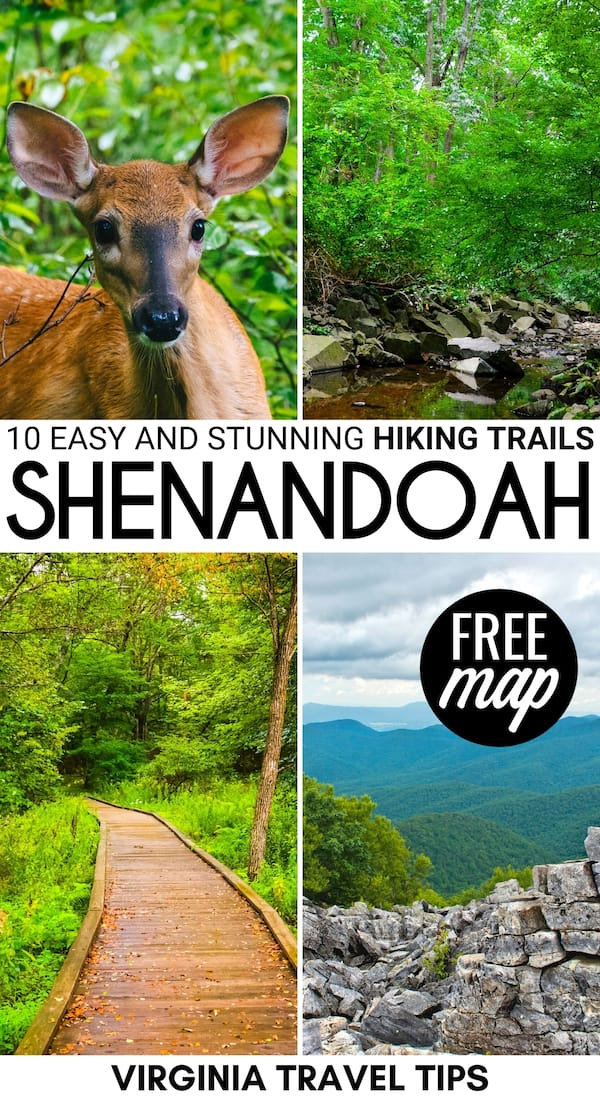 Are you a beginner hiker or traveling with kids to Shenandoah? These easy hikes in Shenandoah National Park are perfect for your trip! Trailhead map included! | Shenandoah trails | Shenandoah hiking | Shenandoah National Park hiking | Shenandoah National Park day hikes | Shenandoah National Park hiking trails | Old Rag Mountain | Hiking in Shenandoah National Park | Trails in Shenandoah National Park | Day hikes in Shenandoah National Park | Waterfall hikes Shenandoah National Park