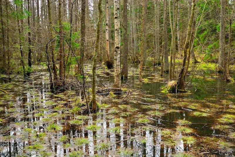 Congaree National Park in South Carolina