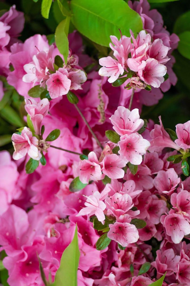 Flowers Near Rock Creek Park