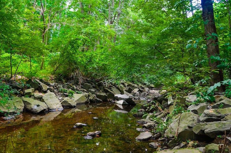 Nature in Virginia trail