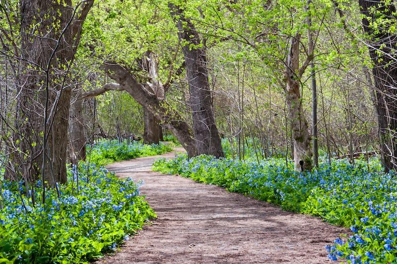 Potomac Heritage Trail wildflowers