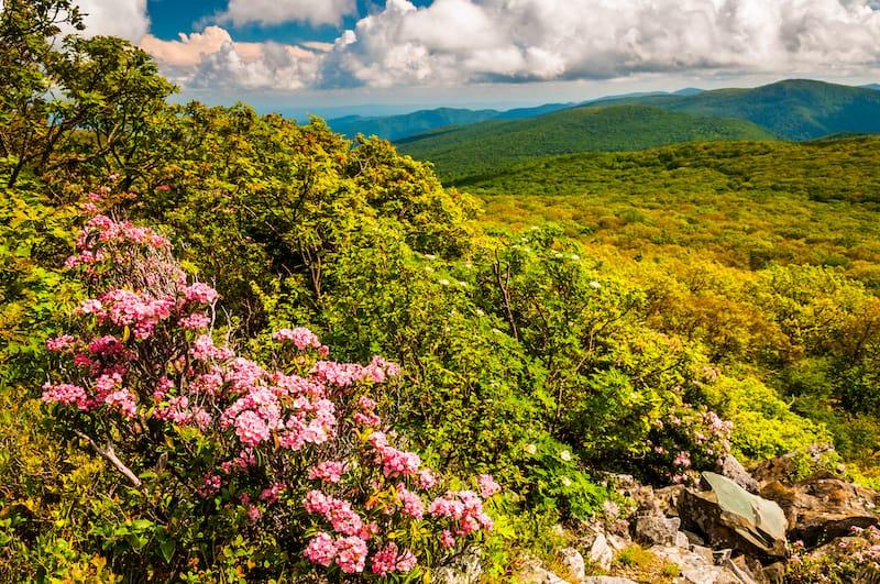 Spring wildflowers in Virginia