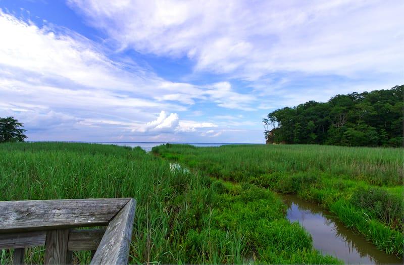 Westmoreland State Park Campground marsh