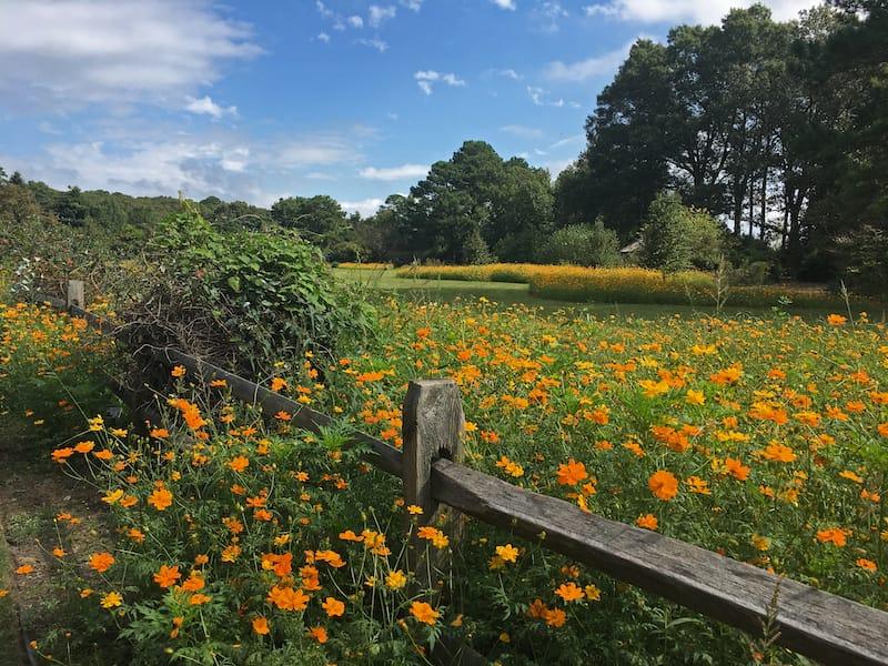 Wildflower Meadow, Virginia
