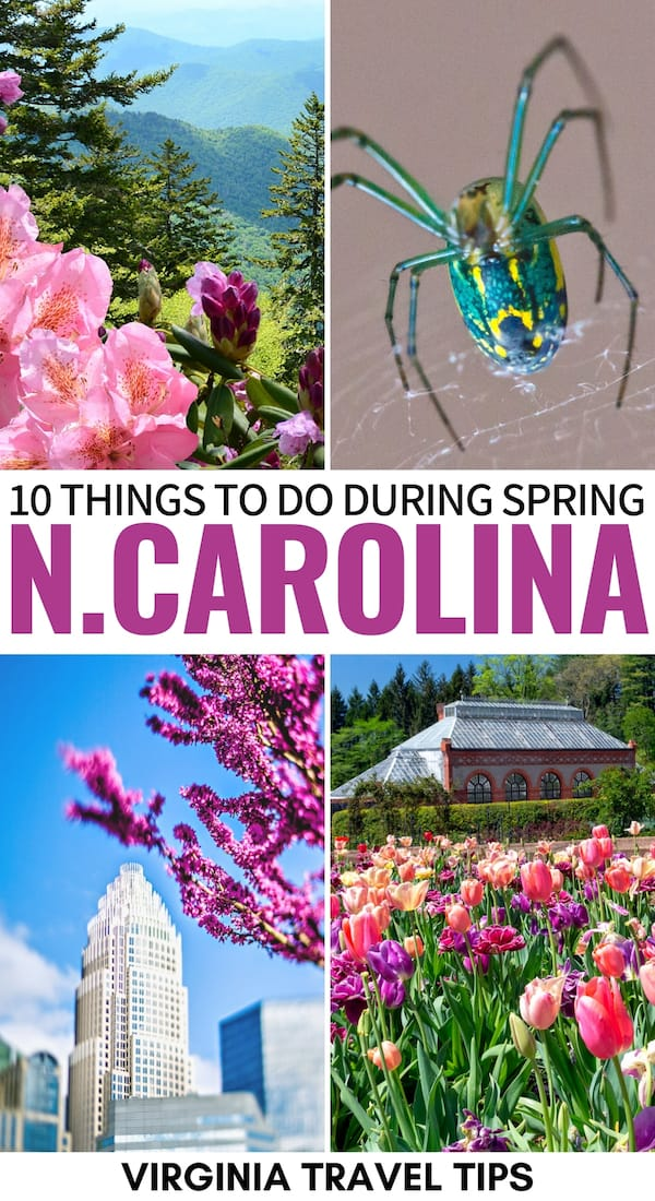 Are you spending spring in NC and looking for fun activities? This guide showcases the best things to do in North Carolina in spring (including nature)! | North Carolina spring | Spring in North Carolina | NC spring | Great Smoky Mountains National Park spring | Pisgah spring | Asheville in spring | Outer Banks in spring | Brevard NC | What to do in North Carolina in spring | North Carolina springtime | Hiking in North Carolina during spring | North Carolina April | North Carolina May | NC March