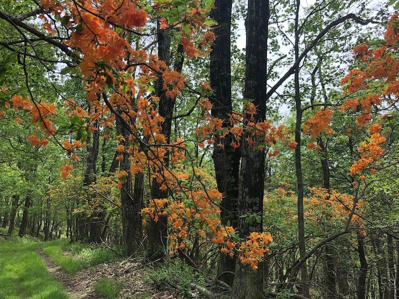 8 Nearby - Black Ridge Trail at Rocky Knob