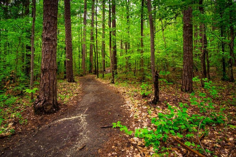 Best hikes near Charlotte NC