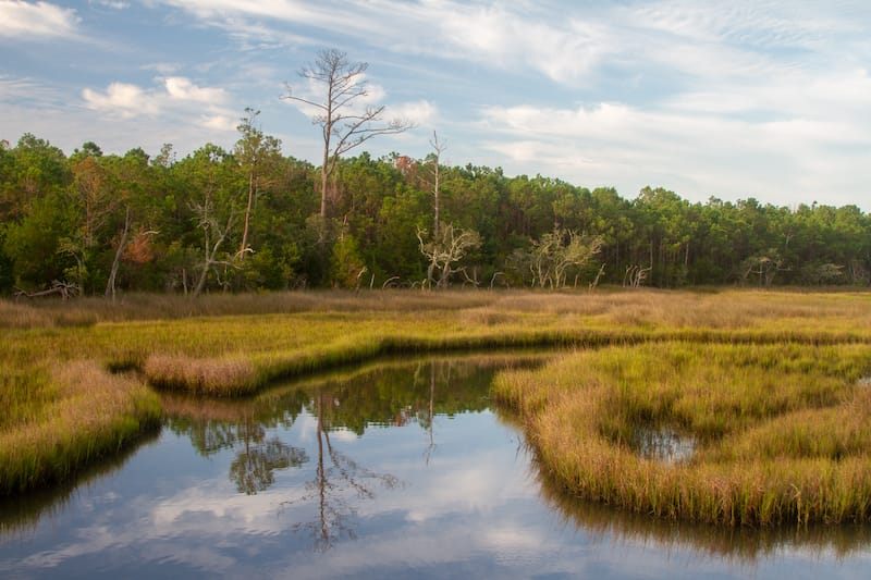Croatan National Forest in NC