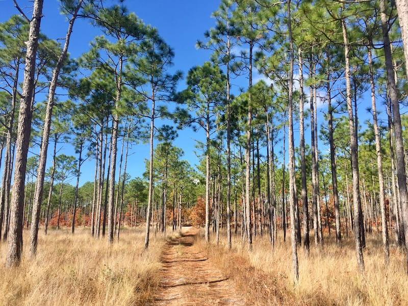 Croatan National Forest in OBX