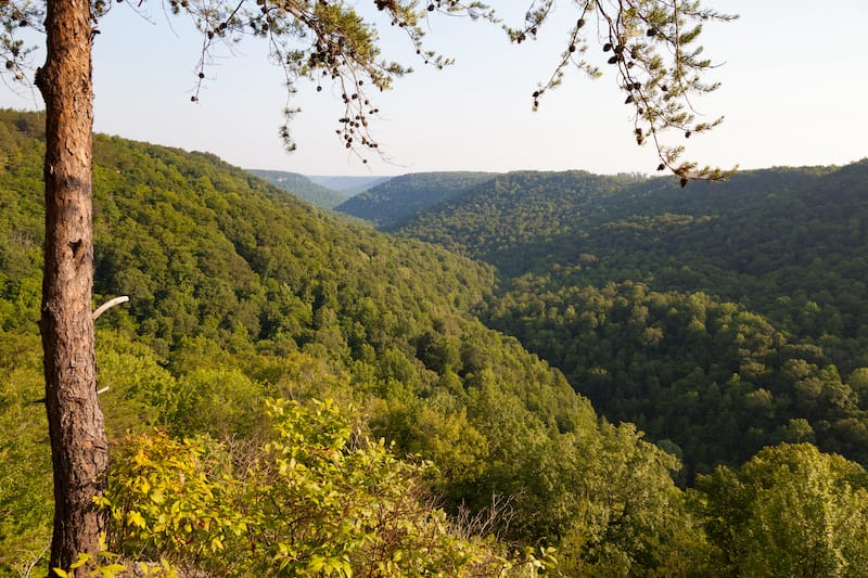 Savage Gulf State Natural Area in South Cumberland