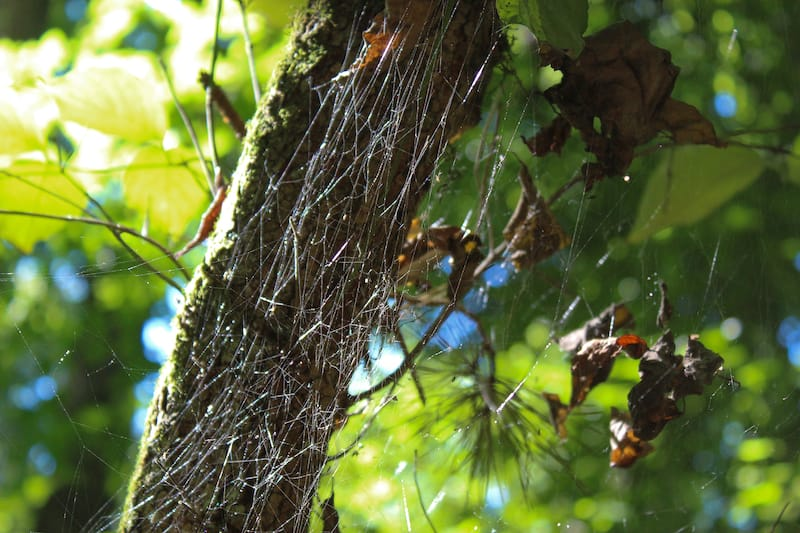 Spiders on the Kingfisher Trail