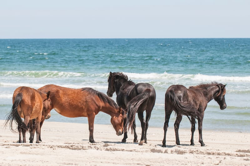 Corolla - Best North Carolina Beaches