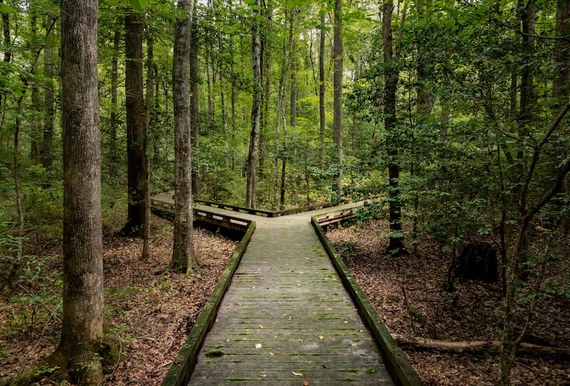 How to visit the Great Dismal Swamp