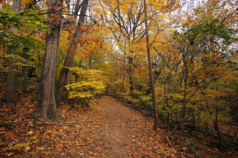 Rock Creek Park in the fall