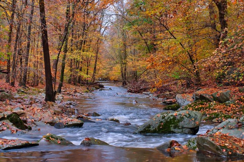 Bynum Run Creek in Bel Air