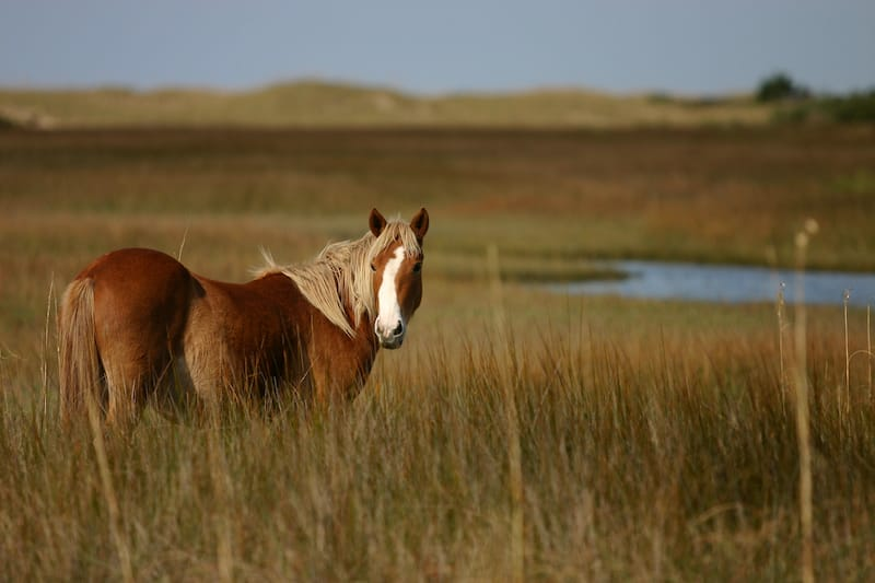 Shackleford Banks