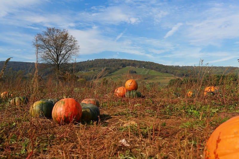 Pumpkin patches in Virginia (+ Virginia corn mazes)