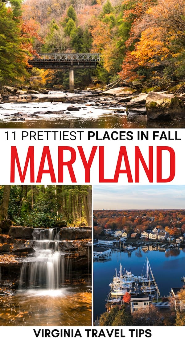 There are many fantastic places to experience fall in Maryland. This is a guide to the best places for fall foliage in Maryland - including state parks and more! | Maryland fall | Maryland fall foliage | Places to visit in Maryland | Maryland in autumn | Autumn in Maryland | Leaf peeping in Maryland