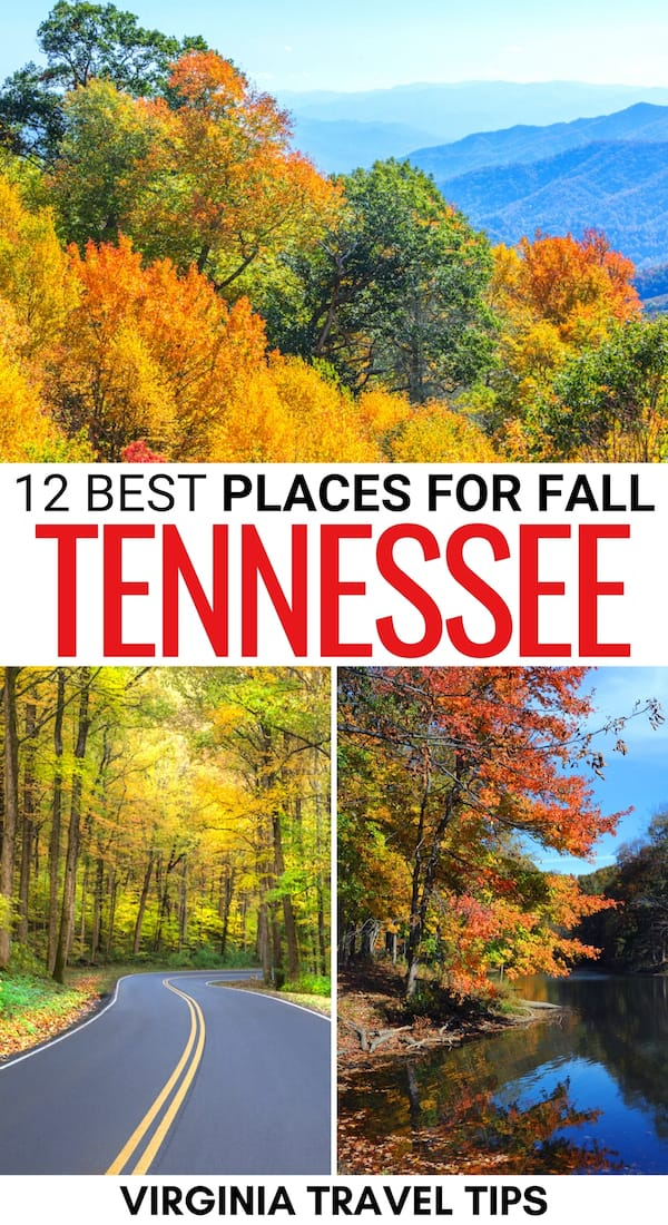 Looking for some gorgeous places to enjoy fall in Tennessee? This guide lists some epic places for fall foliage in Tennessee, including parks, cities, and more!   Tennessee fall   Leaf peeping in Tennessee   Things to do in Tennessee   Fall in Memphis   Fall in Nashville   Fall in Chattanooga   Fall in Great Smoky Mountains National Park   Fall in TN   Autumn in Tennessee