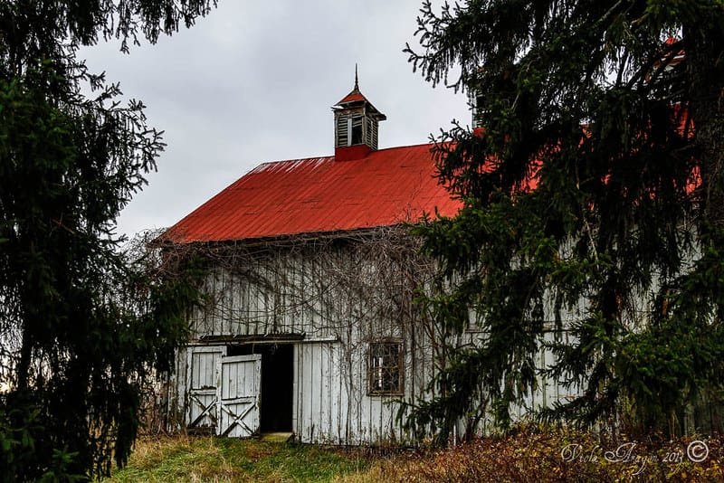 Barn at Selma Plantation via Viola Aragon (Flickr CC BY-ND 2.0)