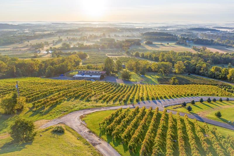 Bluemont Vineyards in Loudoun County